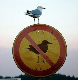 bird fail prohibition